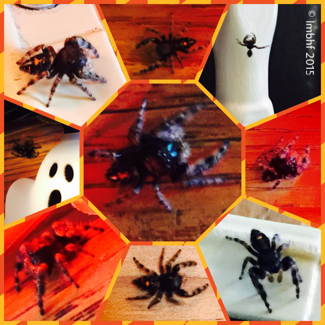 Jumping Spider in the Halloween Decorations