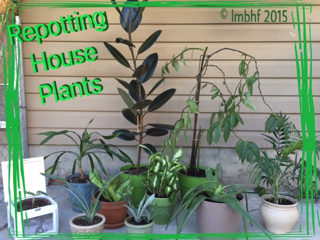 Re-Potting House Plants