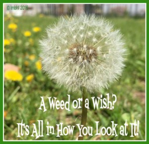 A Weed or A Wish?