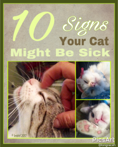 Signs of Sickness in Cats