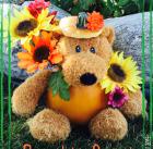 Pumpkin Bear!