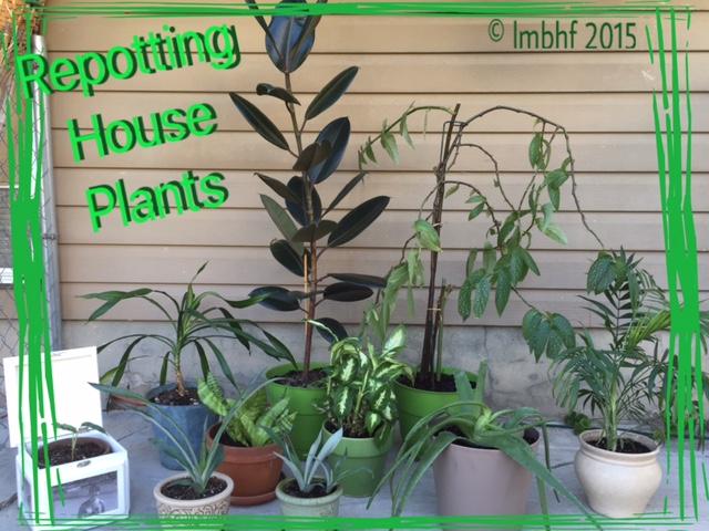 Re-Potting House Plants