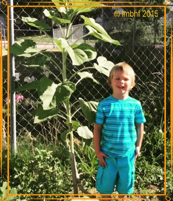 Growing Tall!